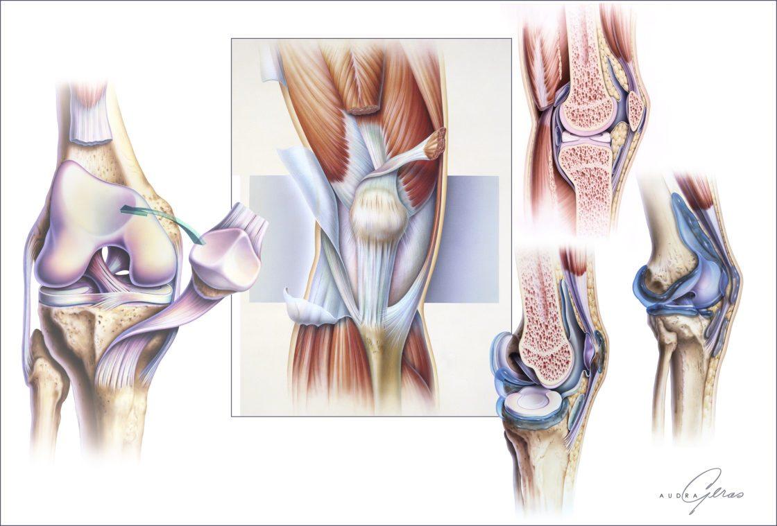 Anatomy of Knee - Geras Healthcare Productions