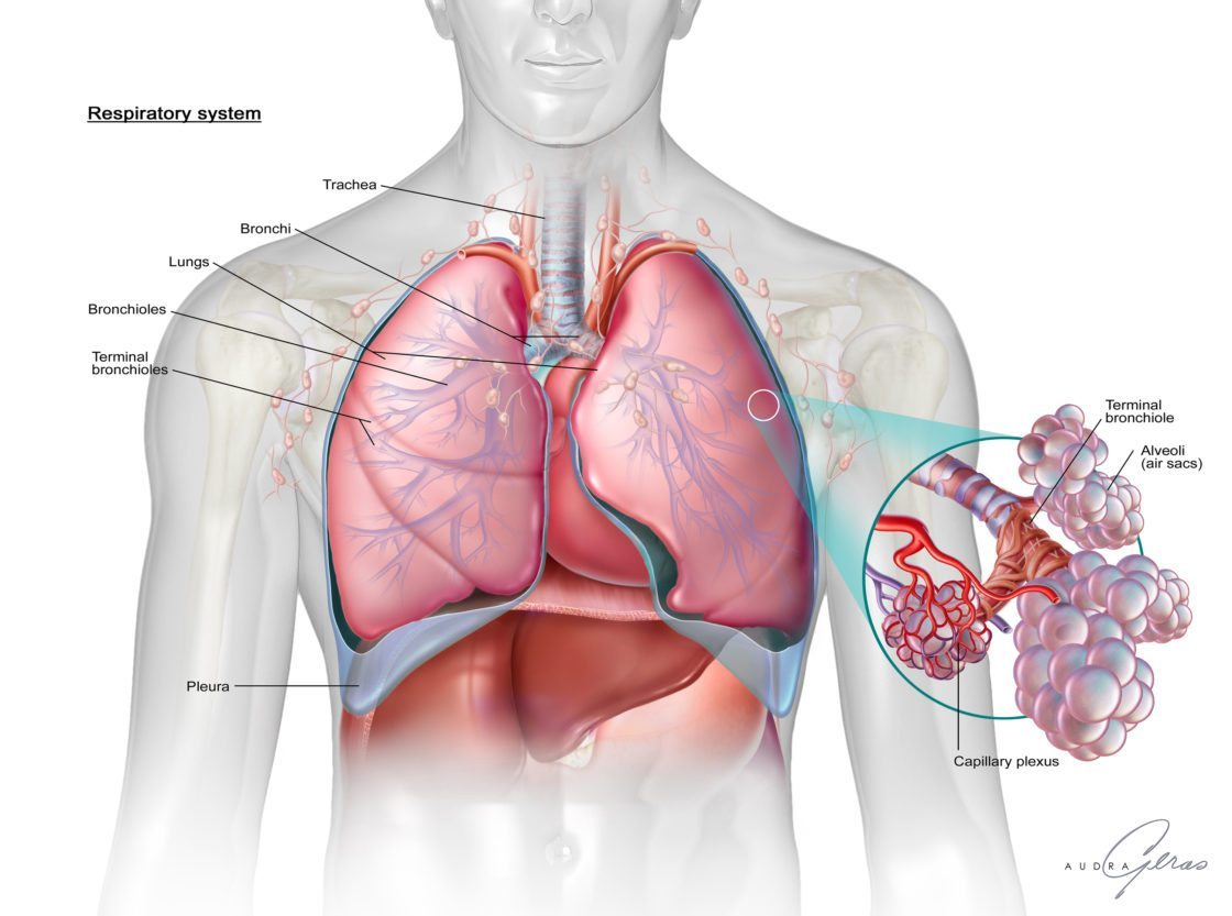 Respiratory System Geras Healthcare Productions