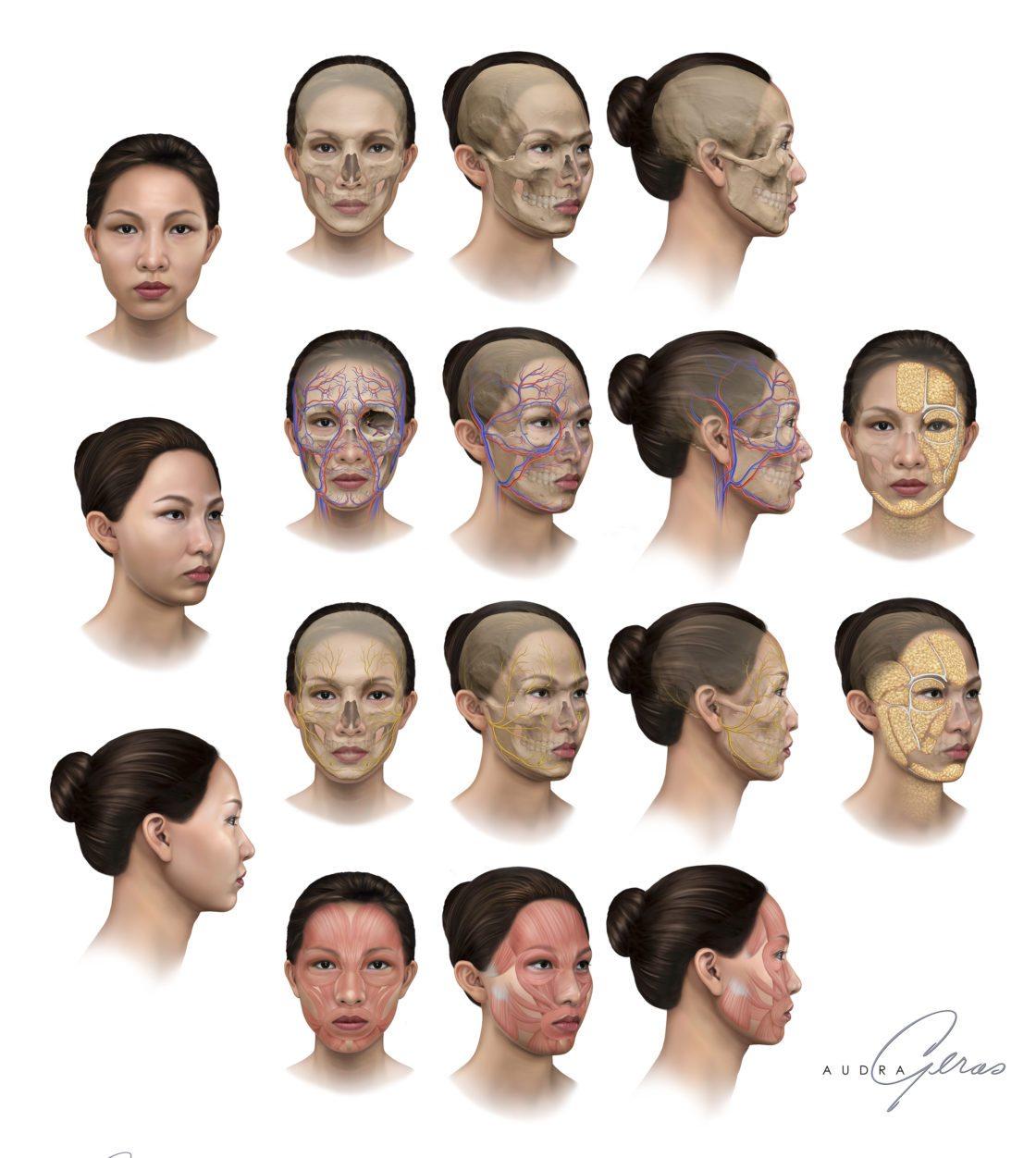 Facial Anatomy Asian Pacific Botox Geras Healthcare Productions